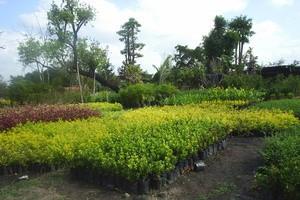 korat_garden